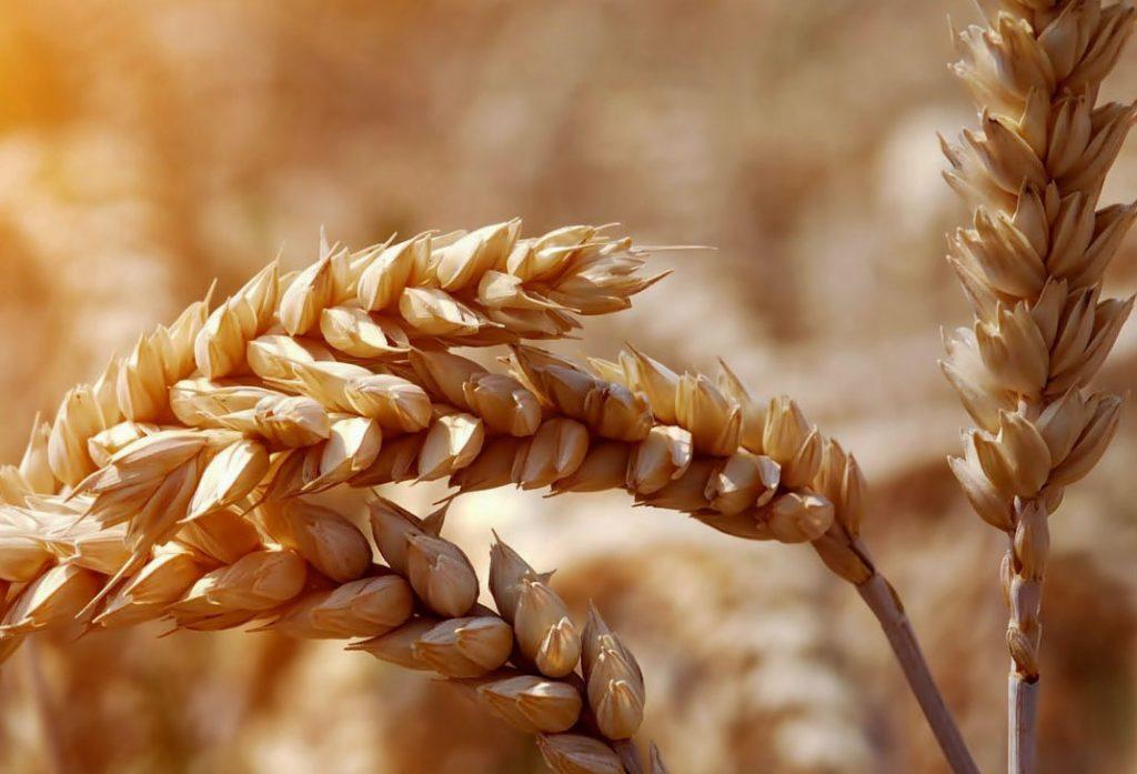 Féculents et céréales